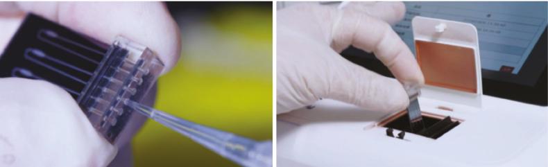 kit di rilevazione dell'acido nucleico